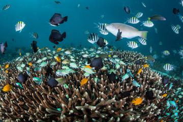 Vibrant Fish Above Coral Colony