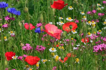 multicoloured flowers on meadow