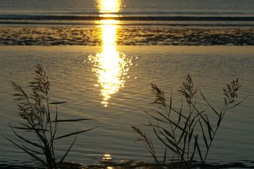 Sonnenuntergang, Gras, Schilf, Siluette, Abendrot,