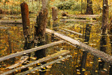 Life cycle in the forest ecosystem. Abandoned, flooded forest poster