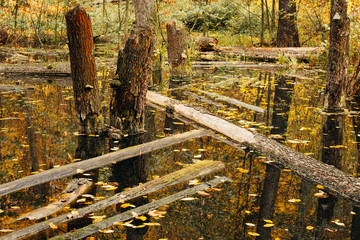 Life cycle in the forest ecosystem. Abandoned, flooded forest