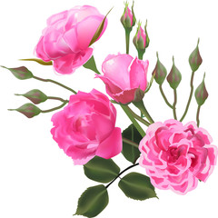 four light pink roses and lot of buds