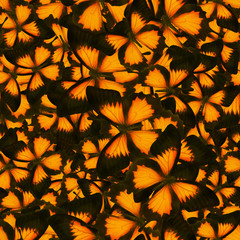 seamless background from orange butterflies