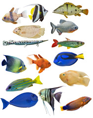 set of fifteen fishes on background