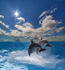 two grey dolphins jumping above blue sea