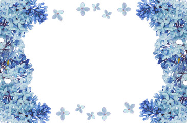 lush blue lilac flower isolated frame