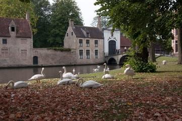 Лебеди на пруду в Европе