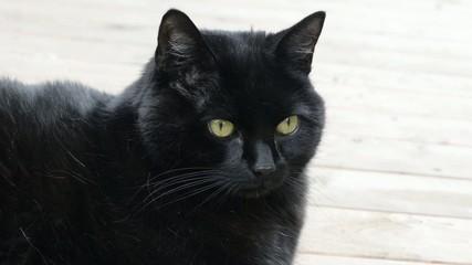 Liegende schwarze Katze