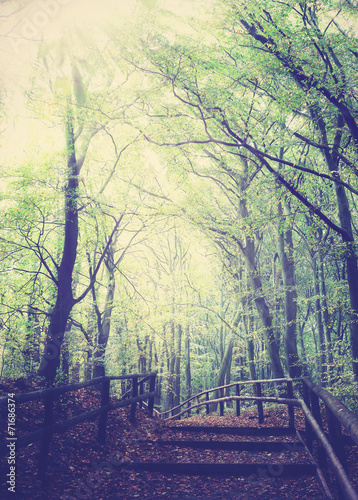 Retro vintage filtered picture of wooden path in forest. © MaciejBledowski