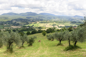 Summer landscape in Umbria (Italy)