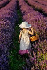 Child harvesting lavender