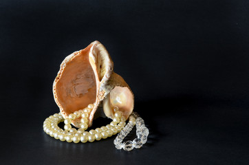 Seashell with white pearls isolated on black