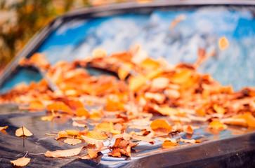 fallen leafs on an old car