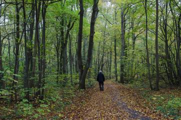 Lone man at autumn walk