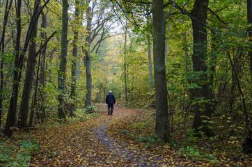 Walking man at a winding footpath at autumn