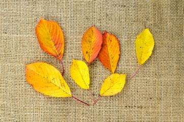Colored leaves at burlap