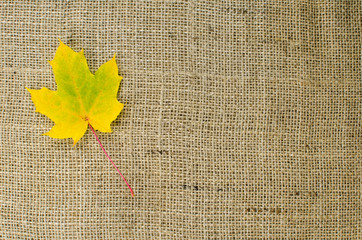 One yellow maple leaf at burlap