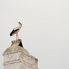 Storch stolz auf dem Schornstein