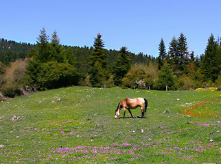 Idyllic scene of  horse grassing on mountain