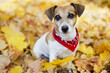 canvas print picture - Portrait of Beautiful dog in golden autumn park