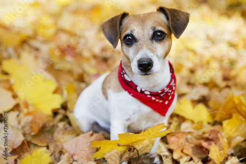 canvas print picture Portrait of Beautiful dog in golden autumn park
