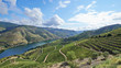 Leinwanddruck Bild - Vineyards in the Valley of the River Douro, Portugal
