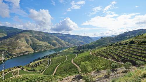 Leinwanddruck Bild Vineyards in the Valley of the River Douro, Portugal