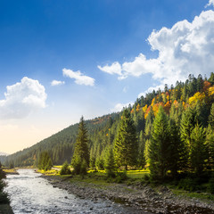 forest river in autumn mountains