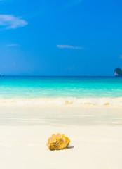 Beach Pearl Tropical Symbol