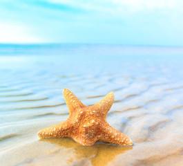 Shell Sea Sand