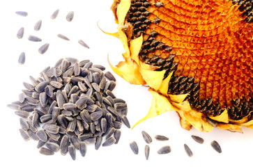 Sunflower and seeds isolated on white