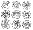 Roses vector - 71698378