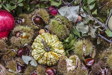 Herbstliche Früchte