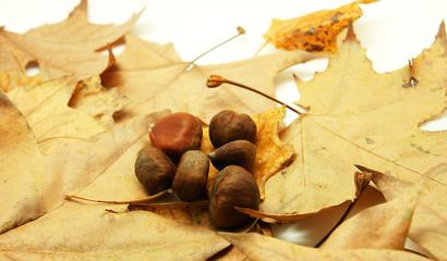 Castañas con fondo de hojas secas