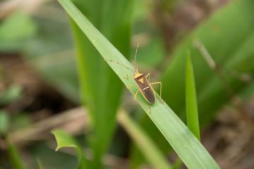 bug.1
