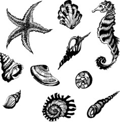 vector sea objects