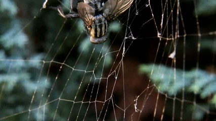 a fly caught in a spider's web
