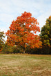 Bright Colorful Autumn Tree in a Park