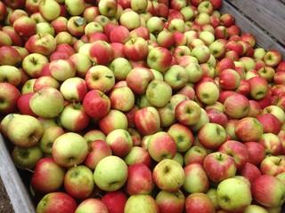 appeloogst in een kist