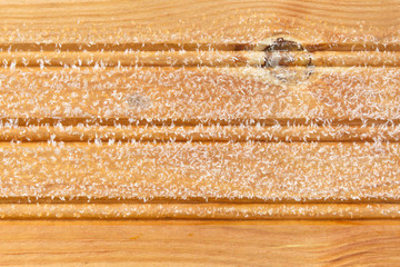 Frost on a wooden board, bacground