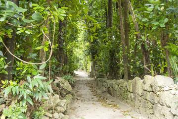 備瀬のフクギ並木と石垣