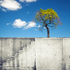 White concrete wall with stairway and small tree above blue sky