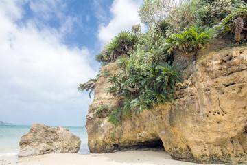 屋我地島の海岸とソテツ