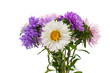 bouquet of asters