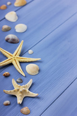 Seashells and starfish on a blue background