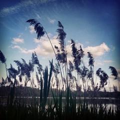 Grass sillhouette