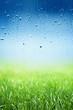 Green grass, rainy day