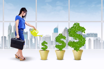 Businesswoman keep the money tree