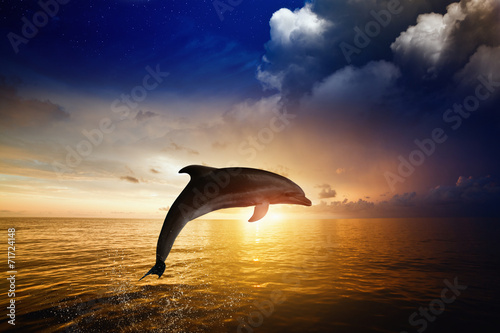 Dolphin jumping - 71724148
