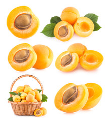 set of 6 apricot images